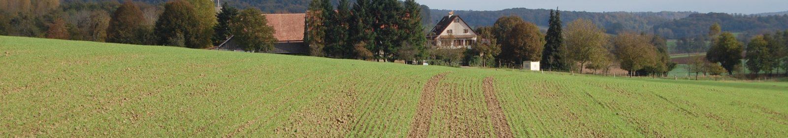 [fr:]Champ de Blé[en:]Wheat Field[de:]Weizenfeld[:]